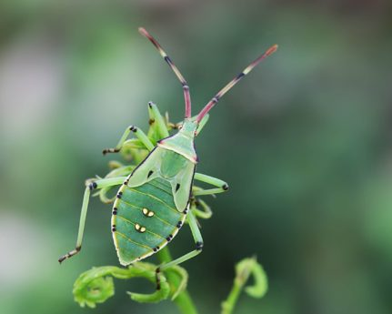 green beetle, metamorphosis, wildlife, insect, nature, invertebrate, leaf