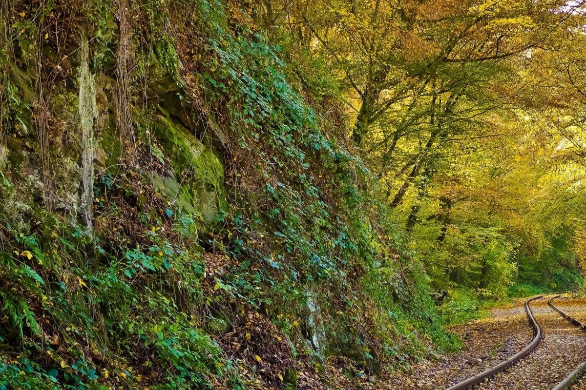 dřevo, příroda, strom, krajina, list, rostlina, Les, lesní stezka