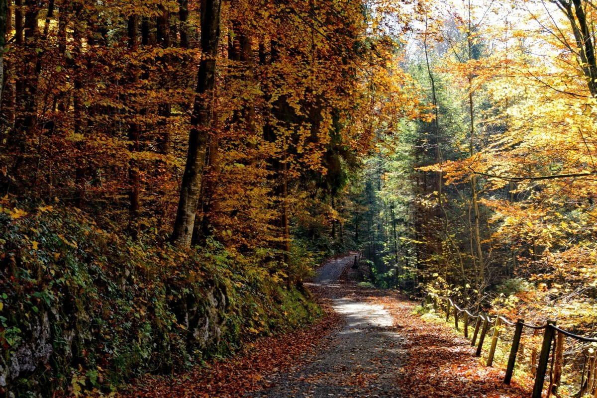naturaleza, hoja, árbol, madera, paisaje, otoño, camino del bosque, follaje