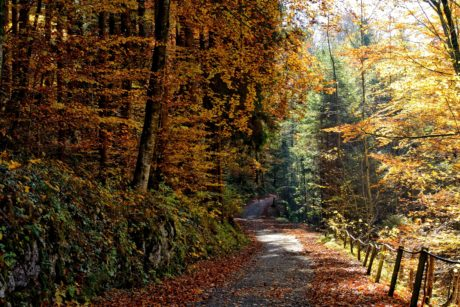 nature, leaf, tree, wood, landscape, autumn, forest road, foliage