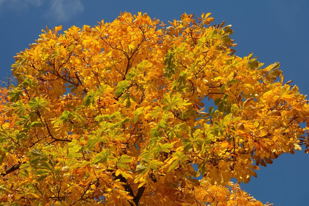 nature, tree, blue sky, ecology, leaf, branch, autumn, plant, forest, foliage