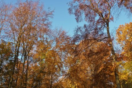 nature, tree, leaf, wood, landscape, branch, forest, autumn