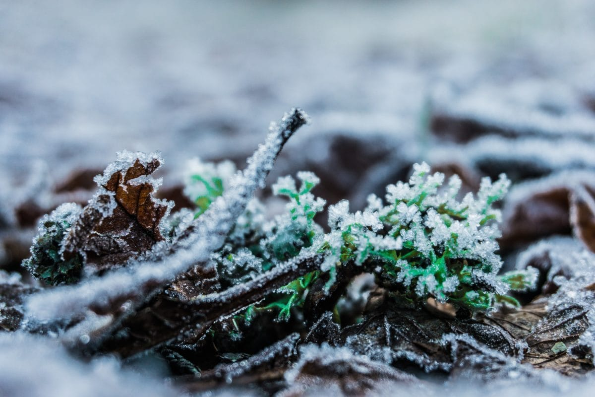 zima, příroda, mráz, LED, rostliny, byliny, sníh, zem