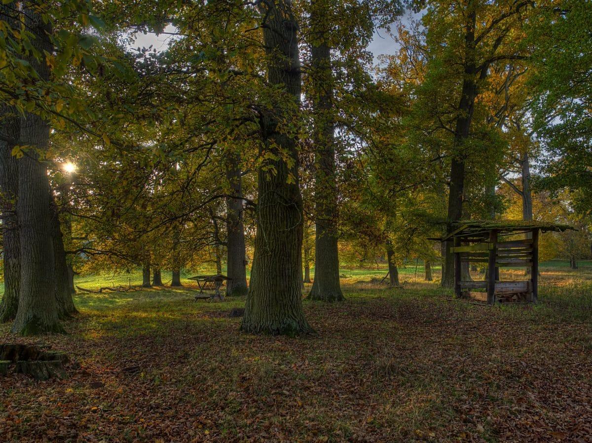 shadow, darkness, wood, dawn, leaf, landscape, tree, forest, autumn, plant