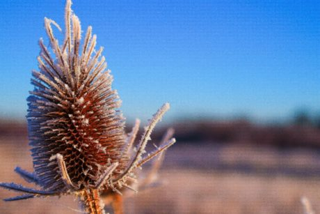 dry thistle, nature, herb, plant, flower, sky, outdoor