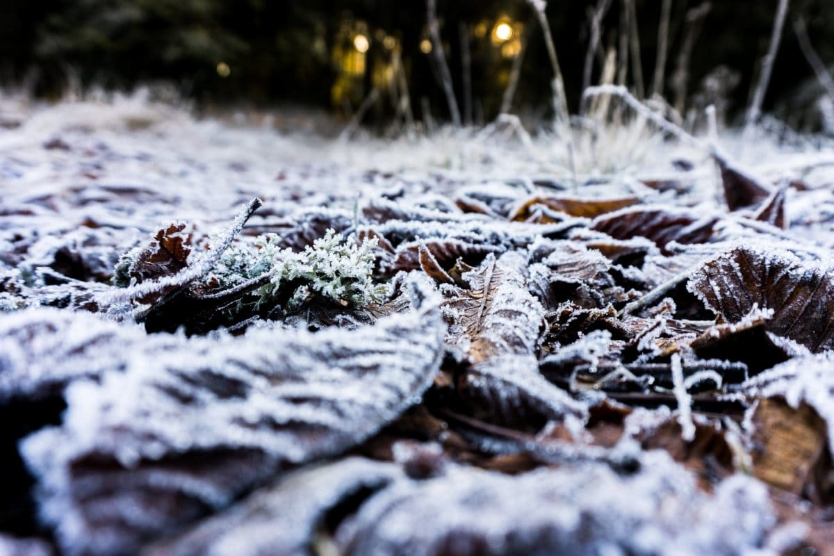 frost, water, snow, wood, cold, nature, winter, ice