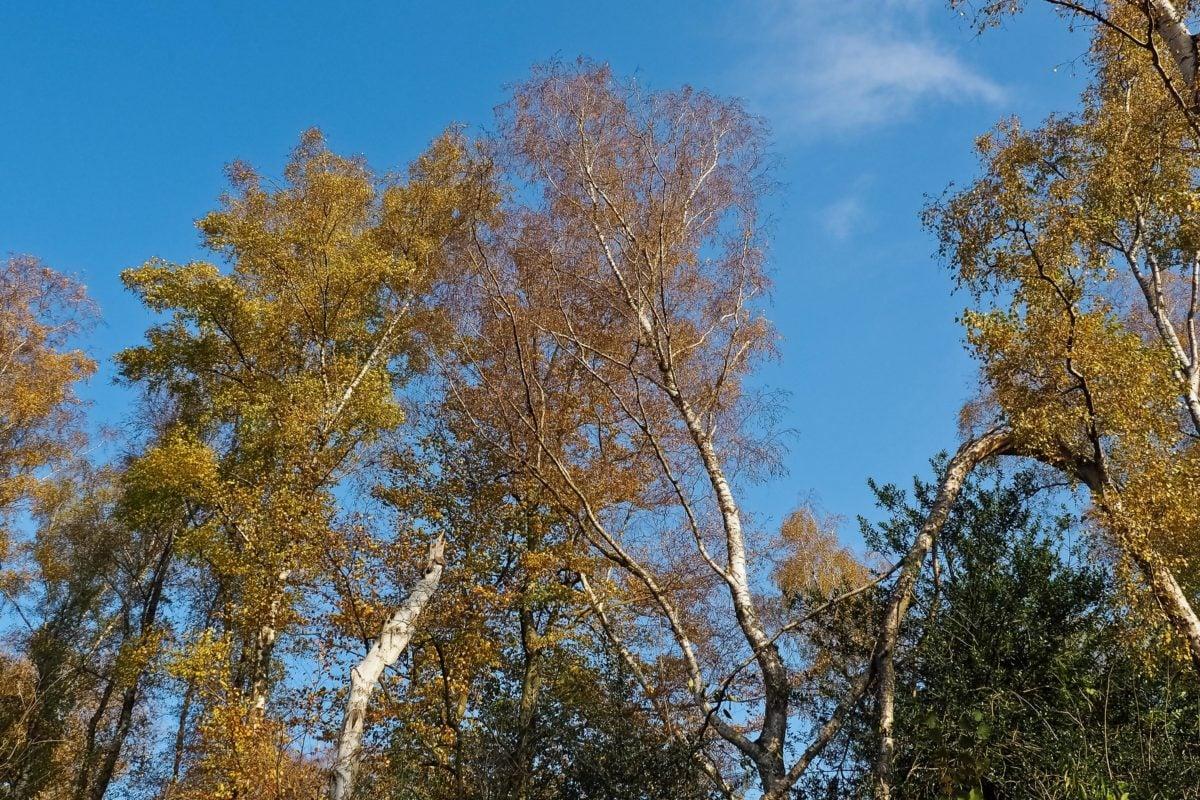 목재, 잎, 분기, 파란 하늘, 나무, 풍경, 자연, 숲