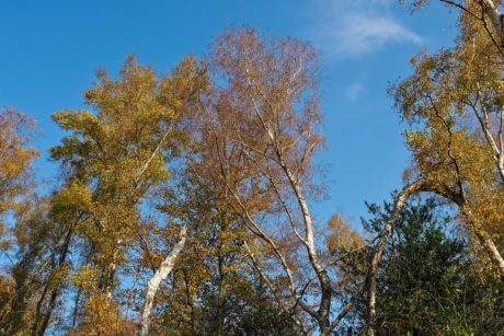 wood, leaf, branch, blue sky, tree, landscape, nature, forest