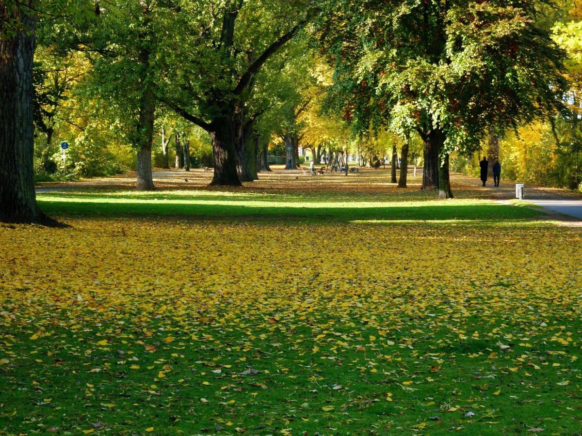 dřevo, krajina, příroda, trávník, stín, strom, tráva, list, pole