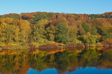 lake, wood, nature, landscape, tree, water, reflection, blue sky, reflection, autumn