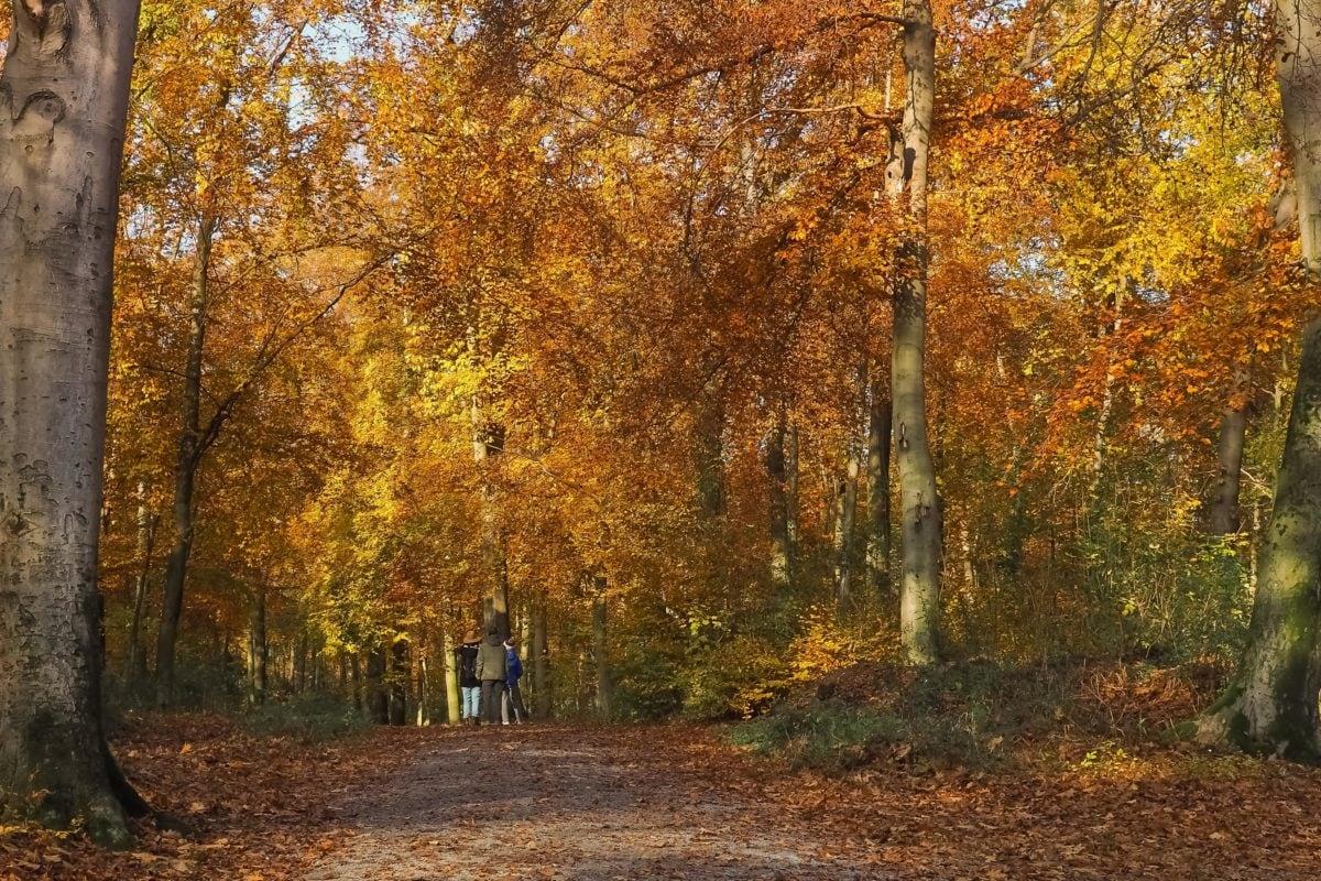 пейзаж, дърво, дърво, листа, природа, сянка, есен, гора, топола