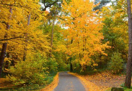 Šumska staza, priroda, stablo, list, drvo, cesta, krajolik, jesen, asfalt