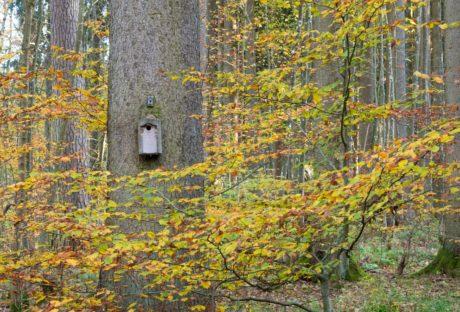 hoja, naturaleza, madera, árbol, rama, paisaje, otoño, planta
