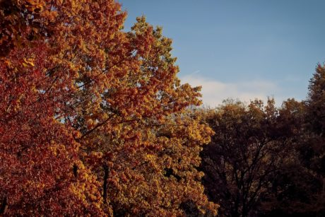 nature, tree, leaf, autumn, forest, landscape, blue sky, plant