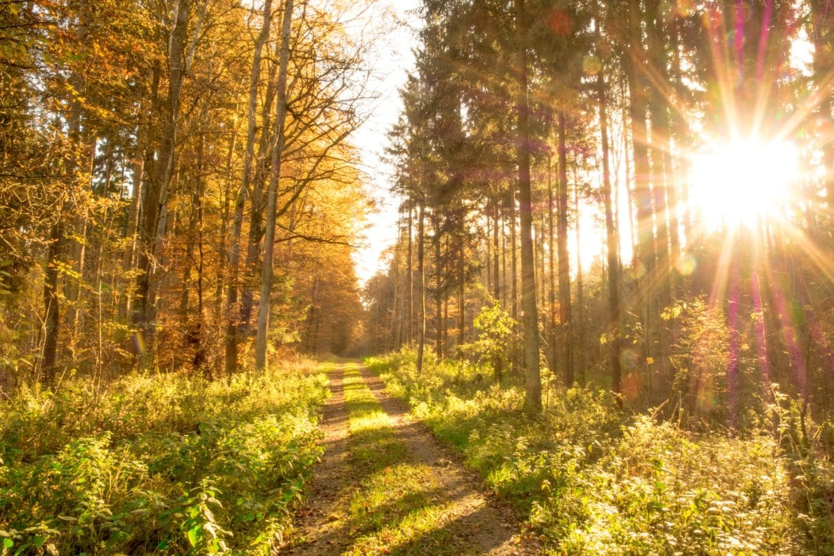 sunshine, wood, tree, landscape, sun, leaf, nature, forest, autumn