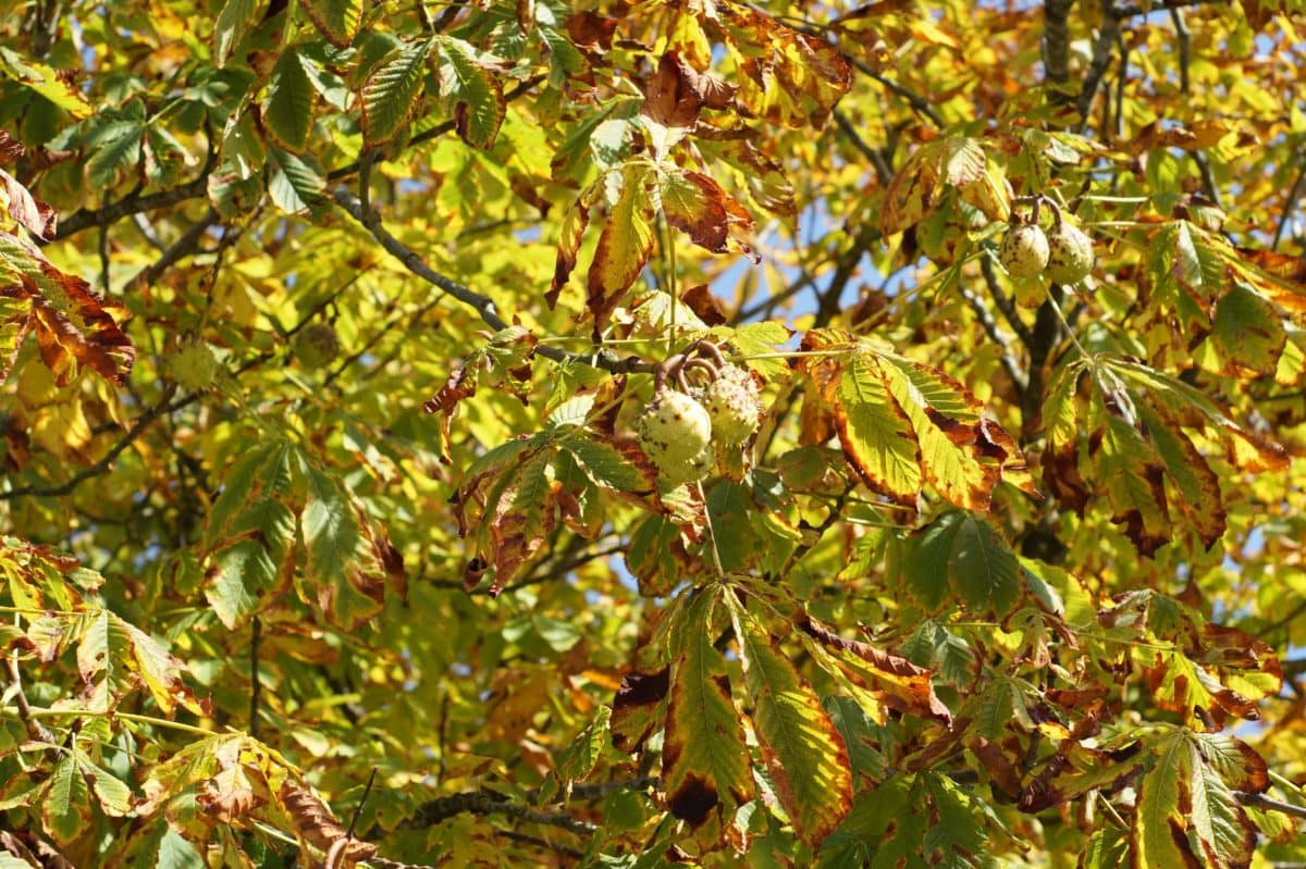yellow leaf, tree, nature, plant, branch, outdoor, ecology