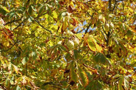 黄叶、树、自然、植物、分枝、户外、生态