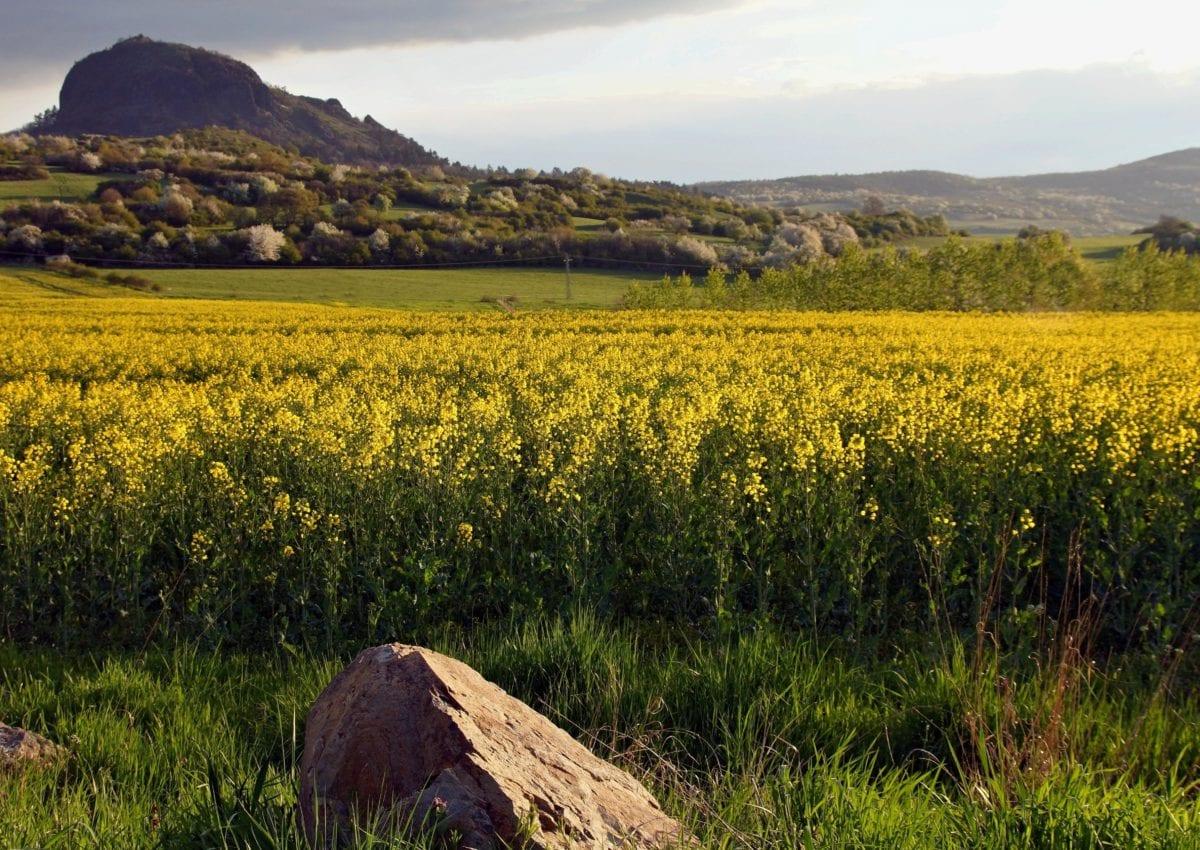 Landschaft, Landwirtschaft, Hang, Himmel, Feld, Natur, Raps, Ölsaaten
