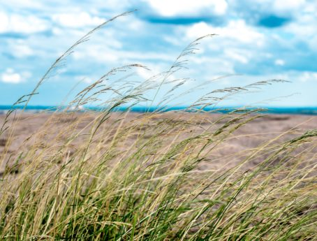 hierba alta, verano, campo, horizonte, cielo azul, paisaje, naturaleza