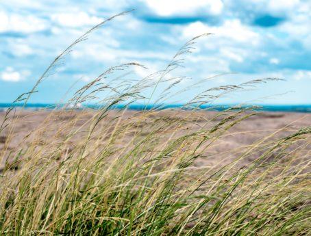 Hochgras, Sommer, Feld, Horizont, blauer Himmel, Landschaft, Natur