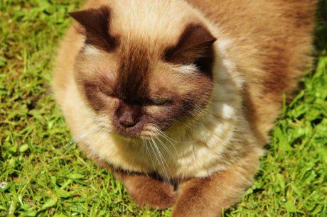 roztomilý, zvíře, kožešina, hnědá kočka, kočičí, kotě, oči, vousy, kočička
