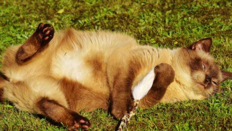 毛皮, 动物, 草, 可爱, 家猫, 户外