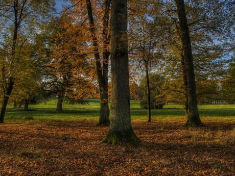 wood, dawn, shadow, darkness, tree, nature, landscape, leaf, forest, autumn