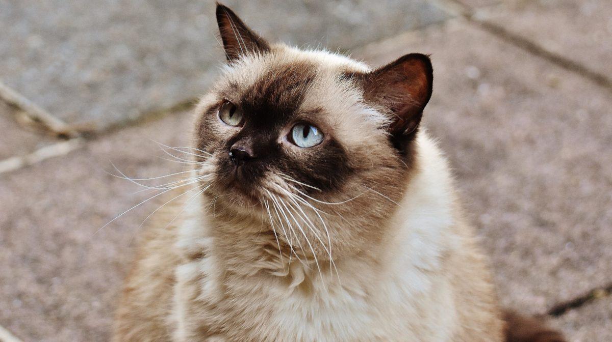 animal, fur, eye, cute, brown cat, pavement, feline, kitten, kitty, whiskers