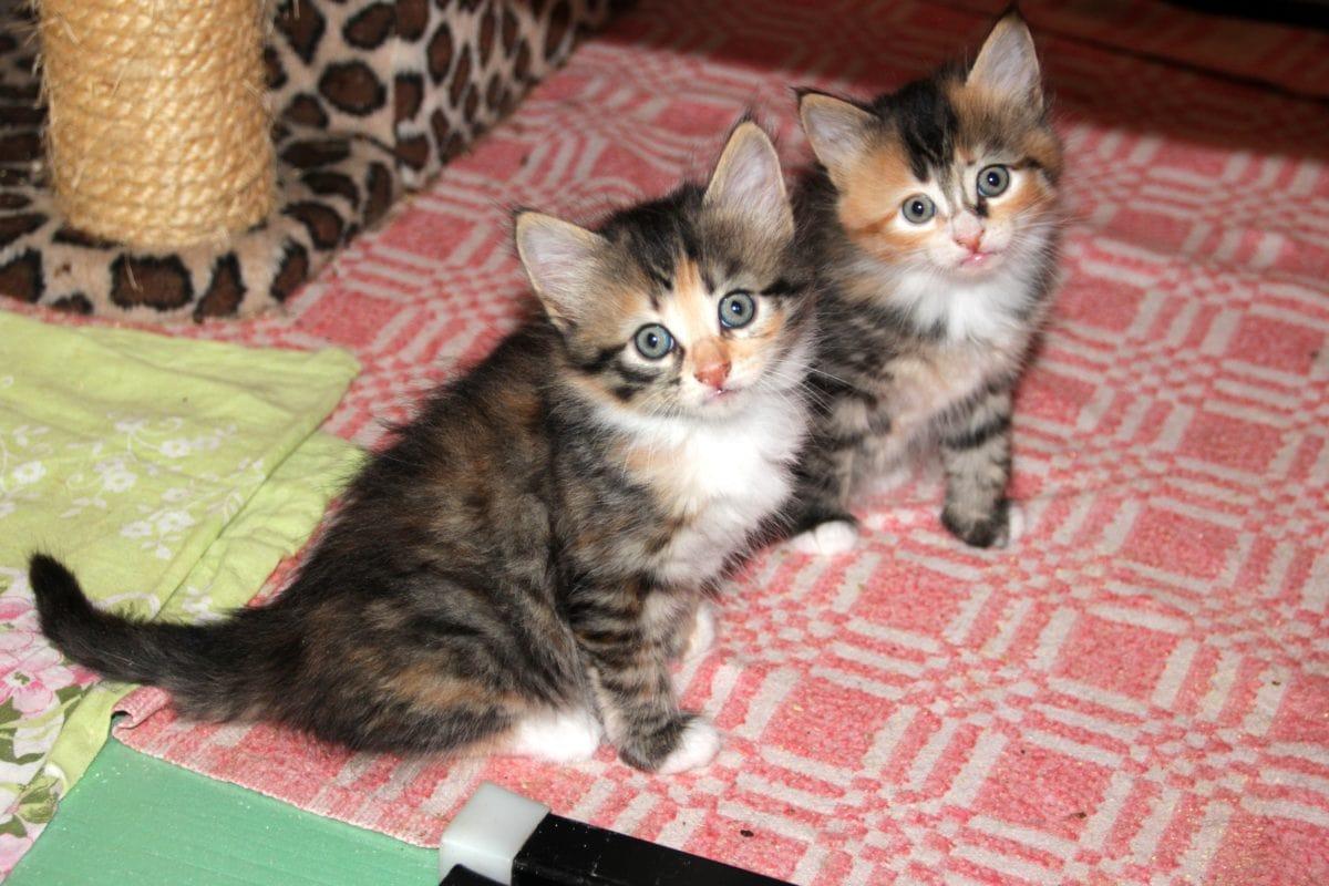 portrait, domestic cat, kitten, cute, animal, young, feline, kitty