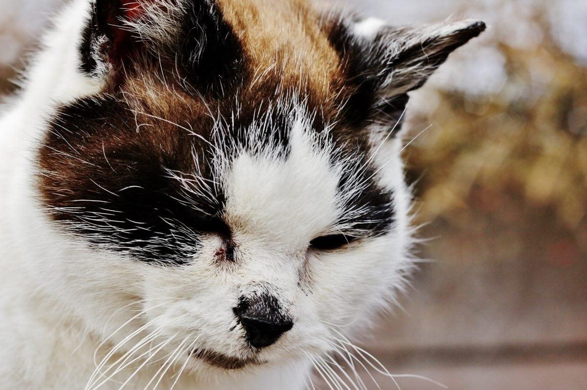 cute, animal, colorful cat, fur, head, portrait, kitten, feline, kitty, eyes