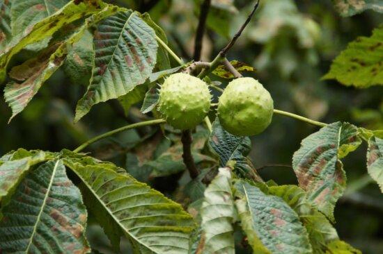 Baum, Ast, Natur, Blatt, Landwirtschaft