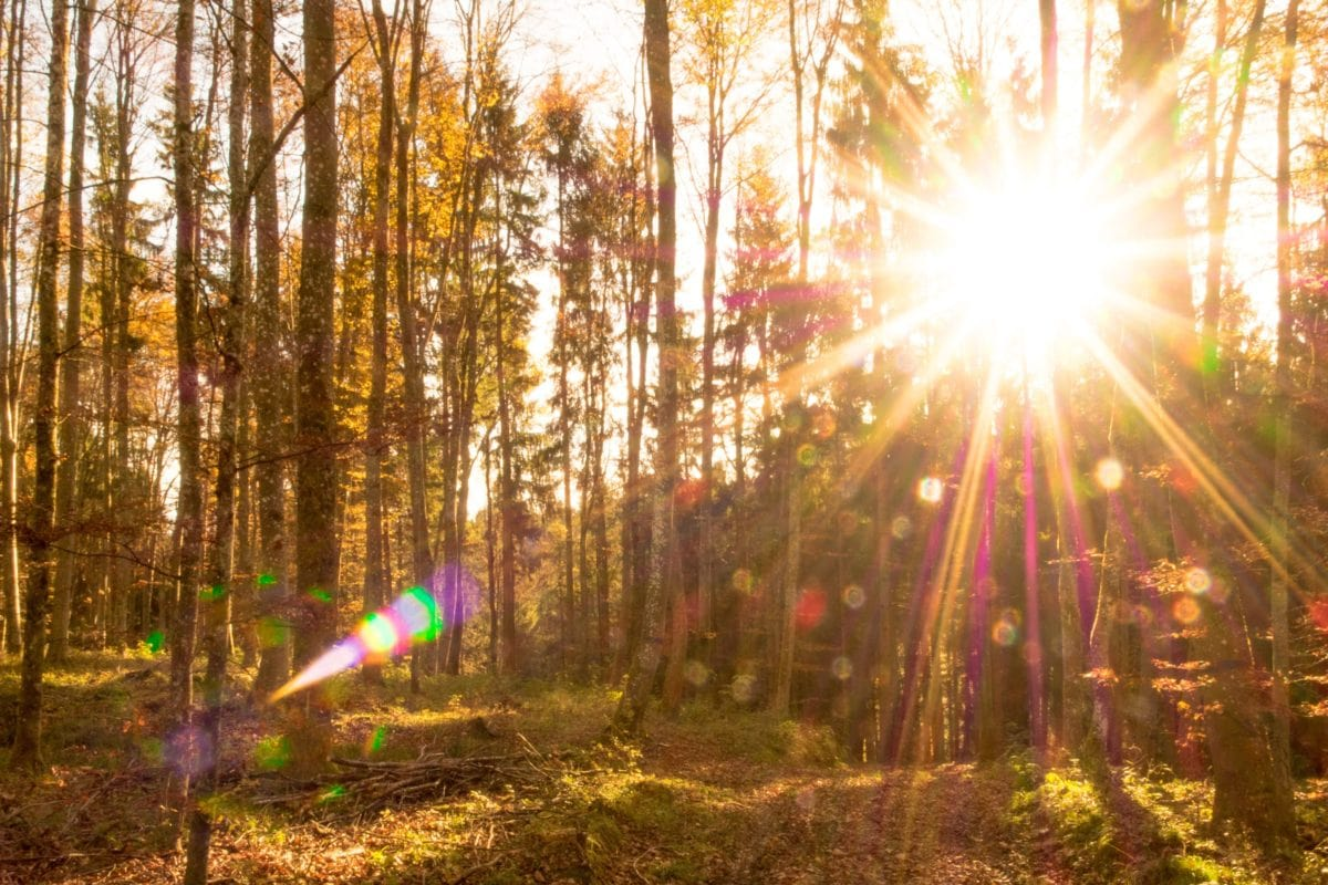 sunshine, sun, leaf, nature, wood, landscape, tree