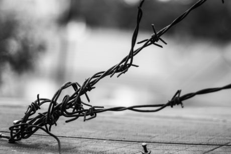 barbed wire, monochrome, tree, wire, fence, monochrome, outdoor