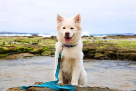 water, white dog, beach, canine, cute, sand, fur, puppy, outdoor