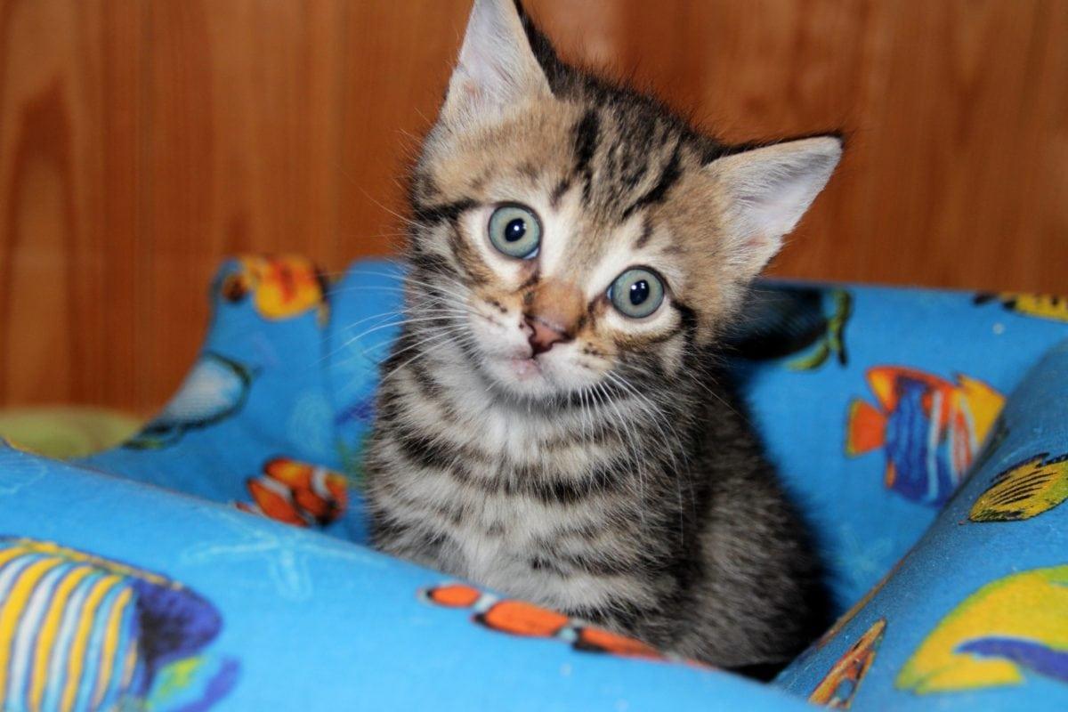 roztomilý kočička obrázek stříkat claire dames