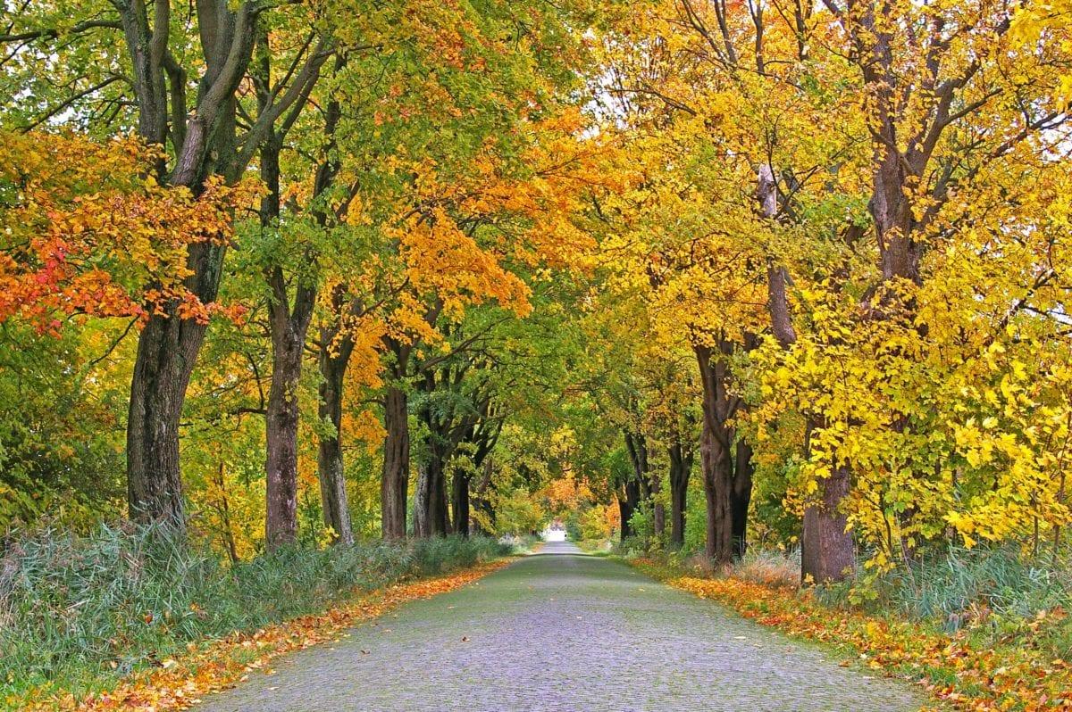 wood, landscape, nature, leaf, tree, autumn, forest trail, poplar