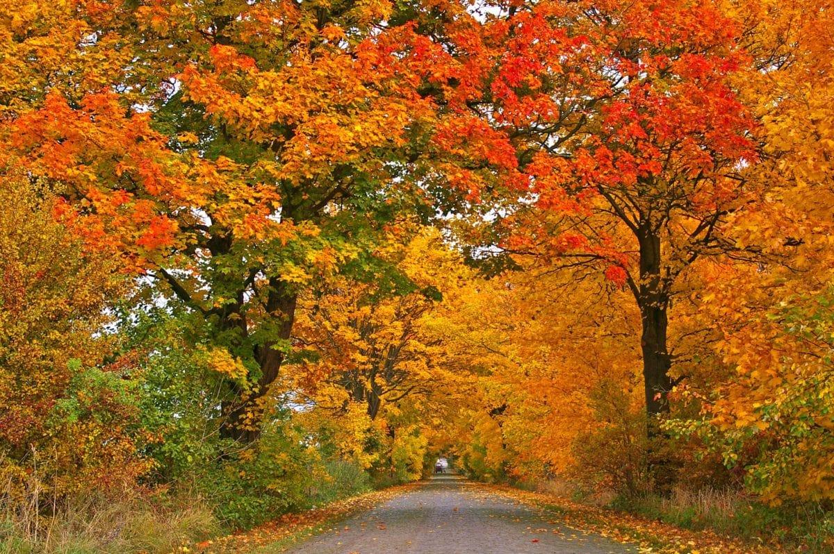 forest road, asphalt, landscape, nature, leaf, tree, autumn, foliage