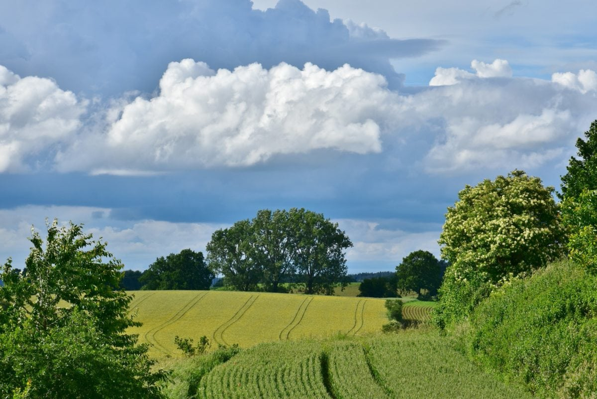field, landscape, blue sky, nature, cloud, tree, countryside, agriculture