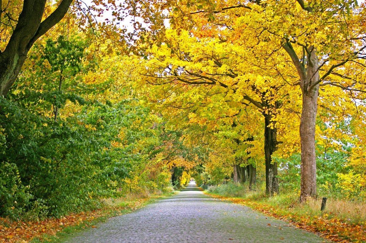 landscape, nature, asphalt, leaf, wood, tree, road, autumn, forest