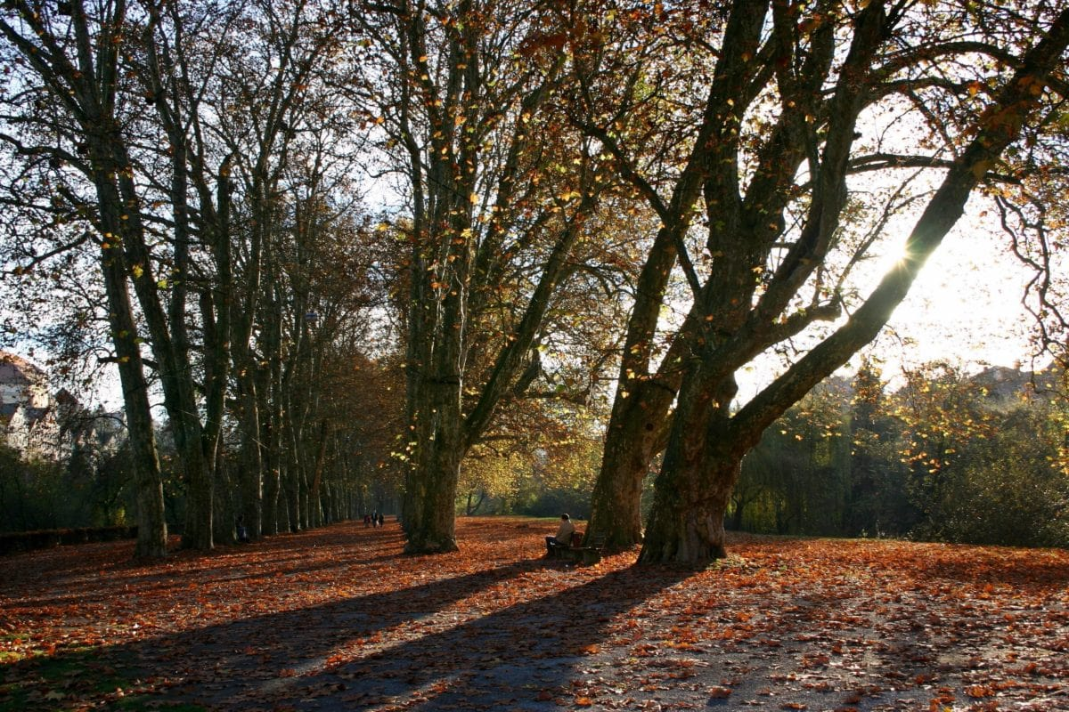 tree, landscape, dawn, shadow, countryside, leaf, nature, wood, forest