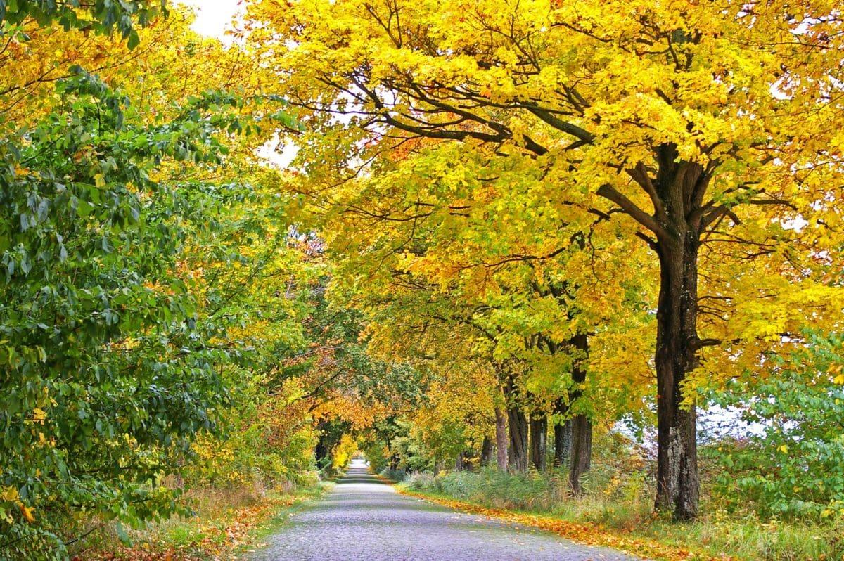 wood, nature, tree, road, leaf, landscape, autumn, plant