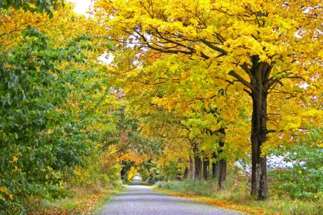 wood, nature, tree, road, leaf, landscape, autumn, plant