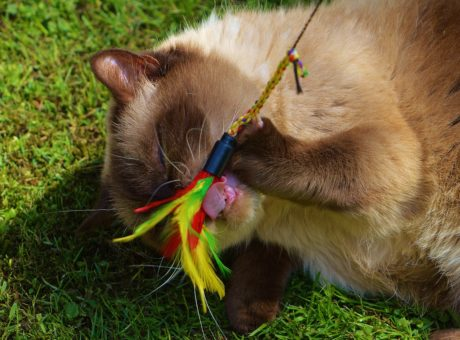 고양이, 장난, 모피, 귀여운, 푸른 잔디, 동물
