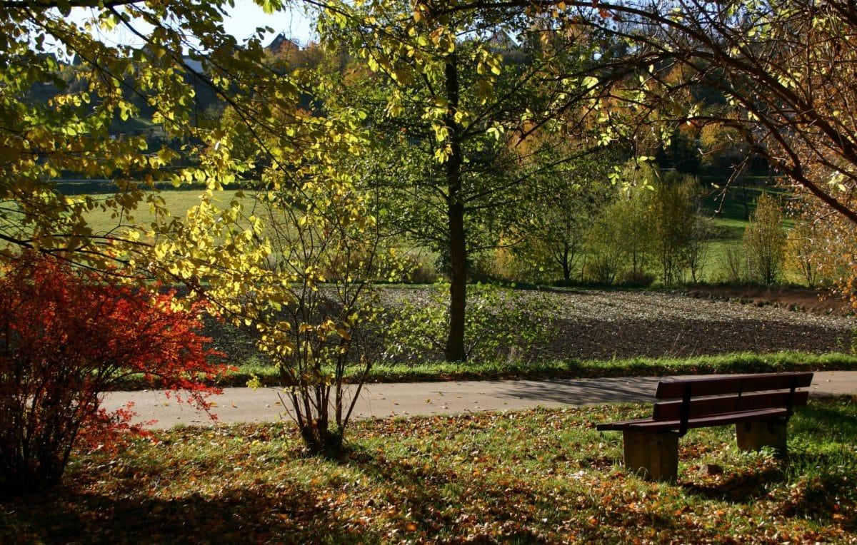 nature, wood, garden, landscape, leaf, bench, tree, autumn