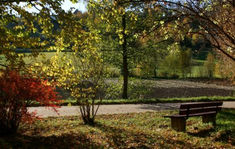 nature, wood, garden, landscape, leaf, bench, tree, autumn
