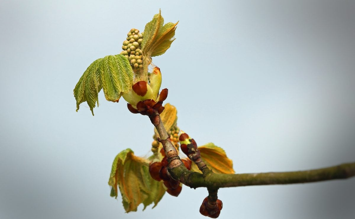 tree, nature, green leaf, spring time, plant, branch