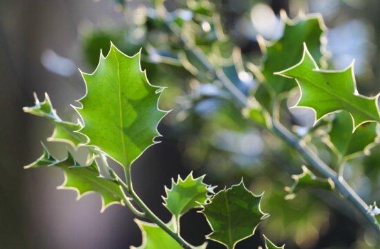 Grünes Blatt, Natur, Eiche, Zweig, Frühlingszeit, Pflanze, Outdoor