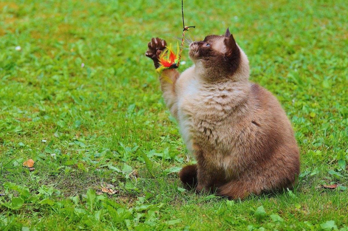 lindo, hierba, animal, gato, felino, piel, gatito, gatito, al aire libre