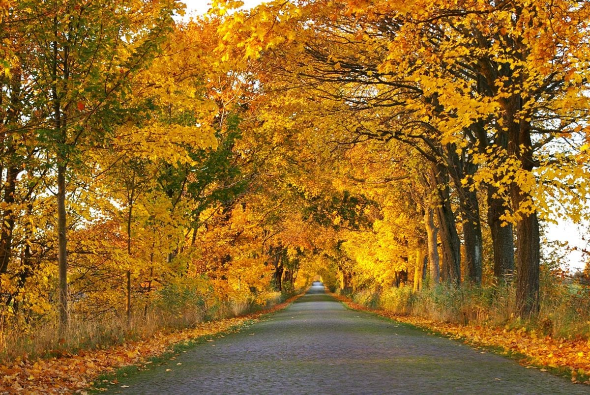 road, wood, landscape, nature, tree, leaf, autumn, forest road