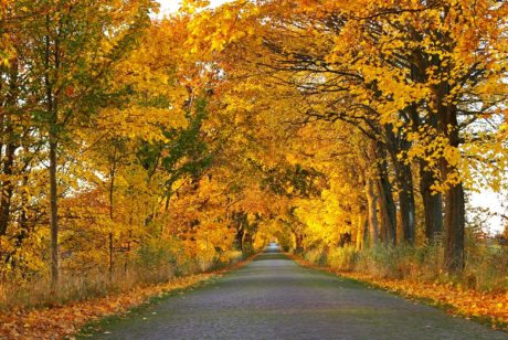 road, wood, landscape, nature, tree, leaf, autumn, forest road
